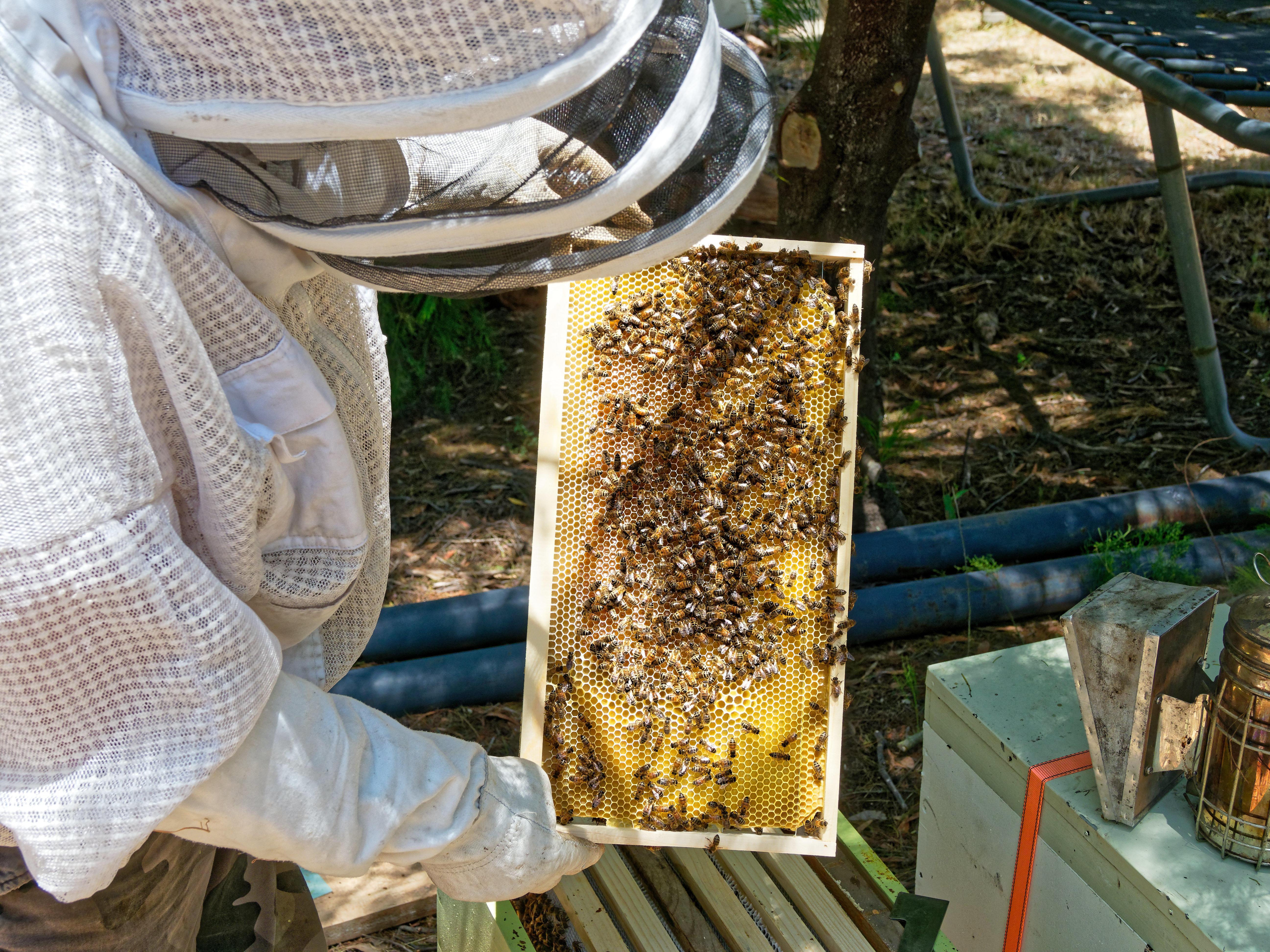 Inspecting-beehives-25.jpeg