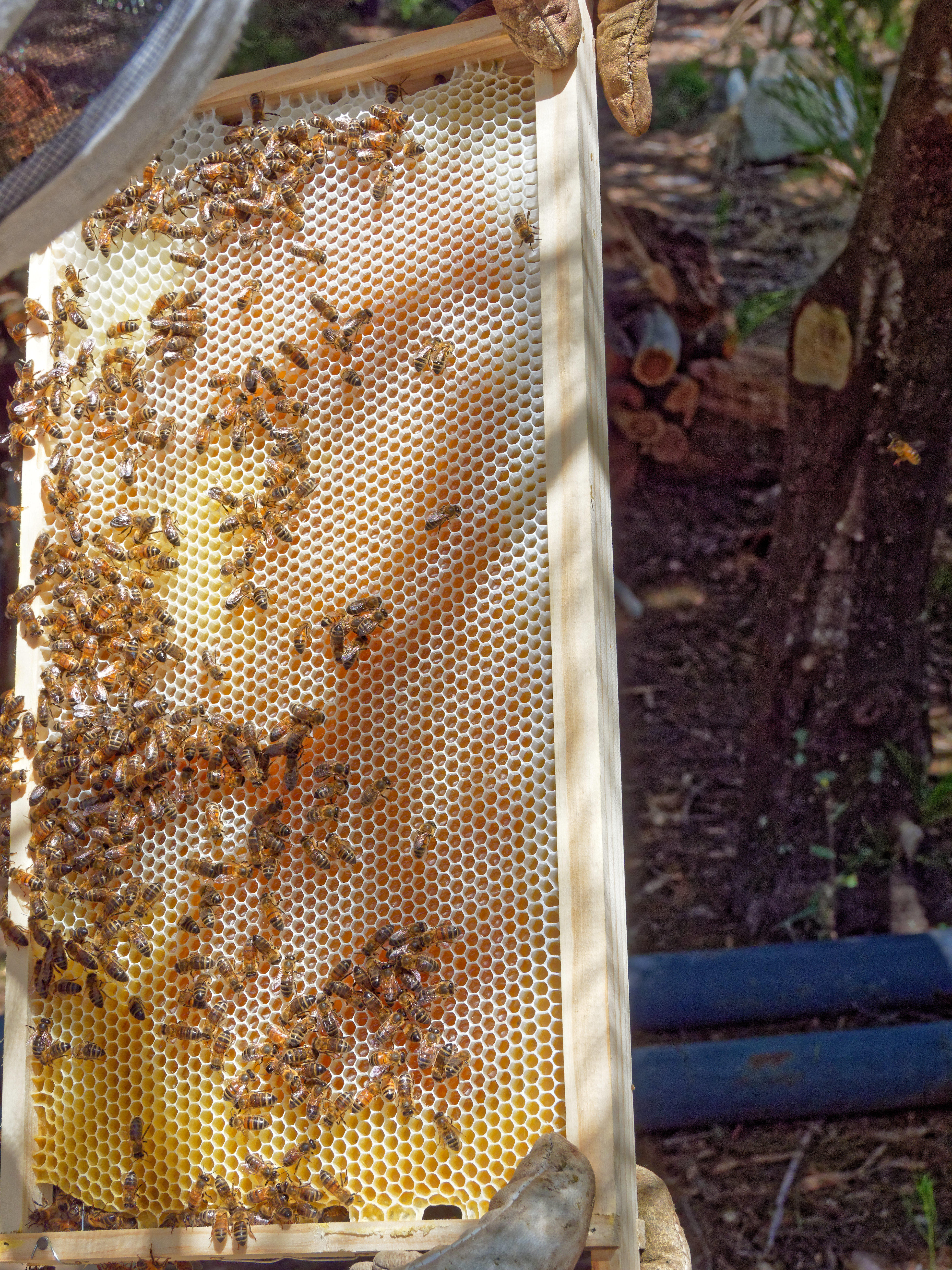 Inspecting-beehives-29.jpeg