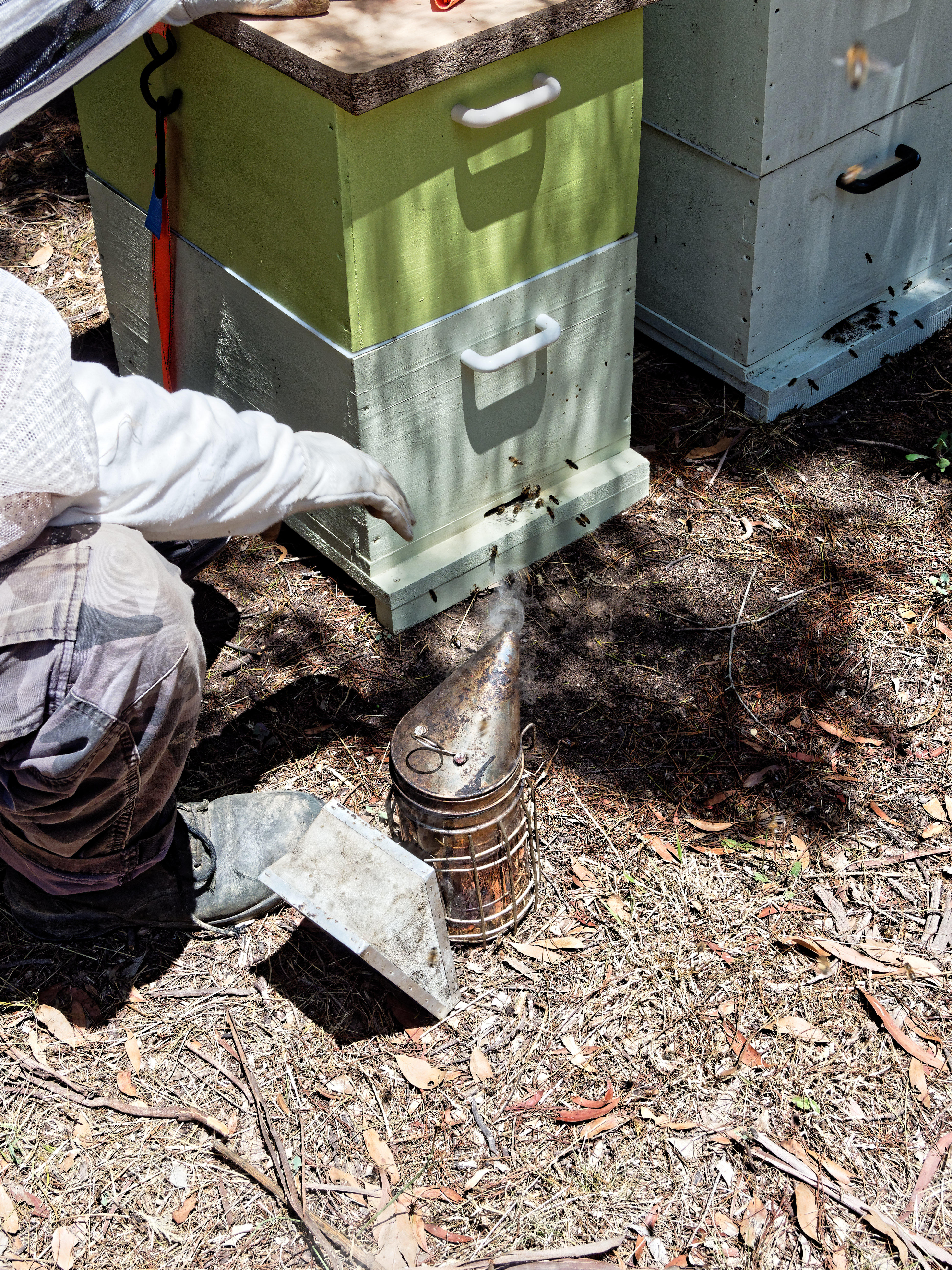 Inspecting-beehives-3.jpeg