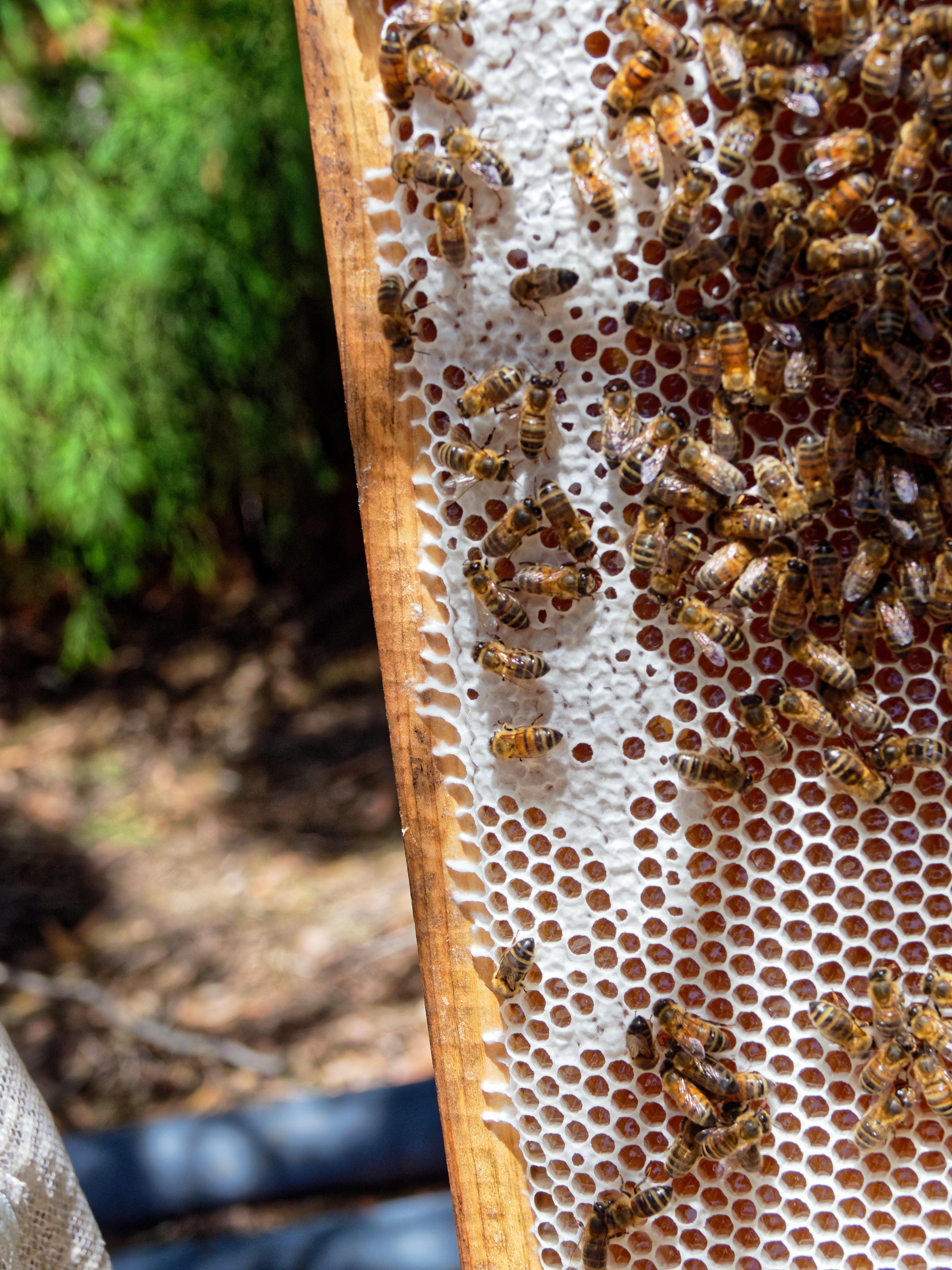 Inspecting-beehives-31.jpeg