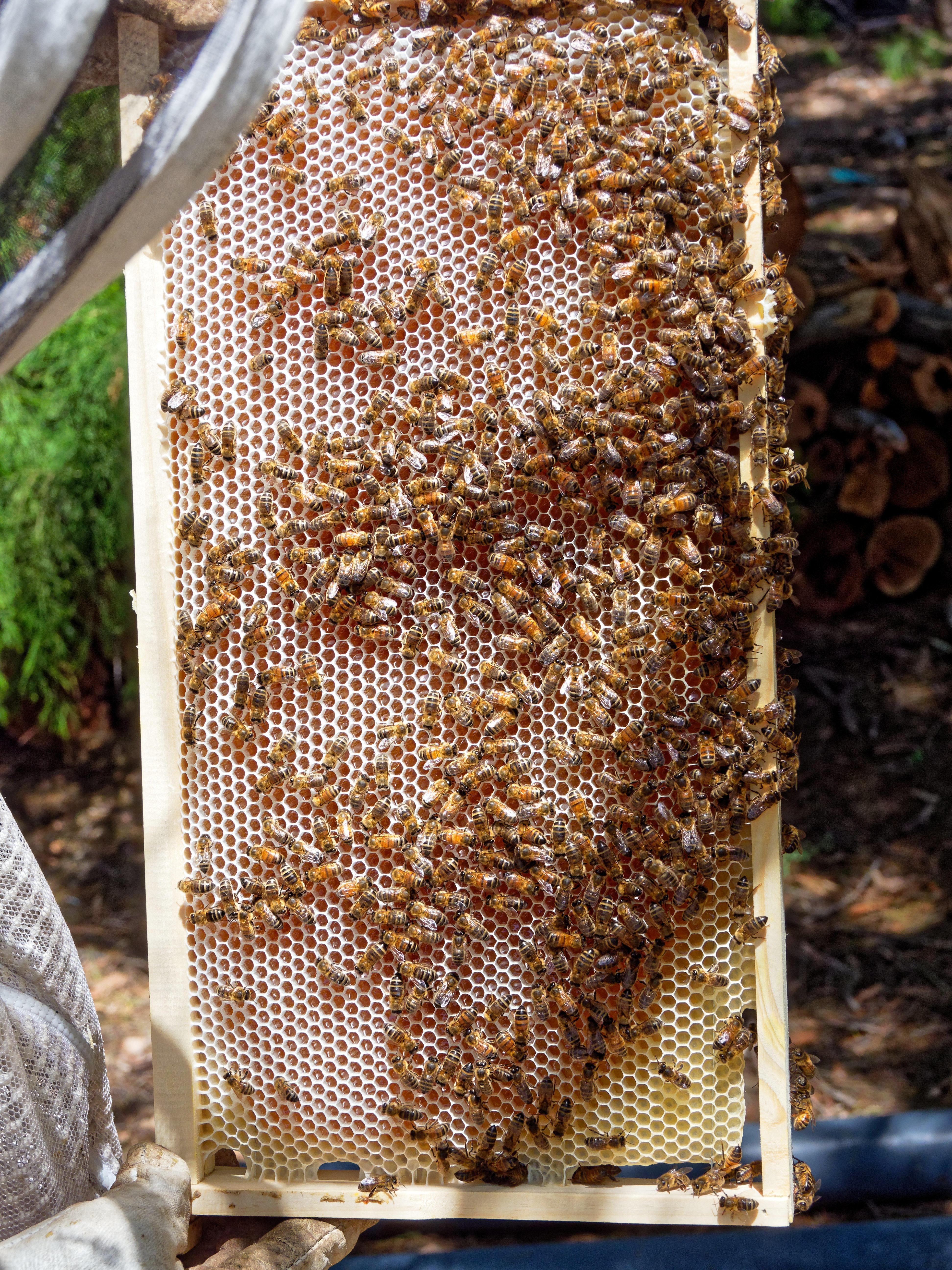 Inspecting-beehives-33.jpeg