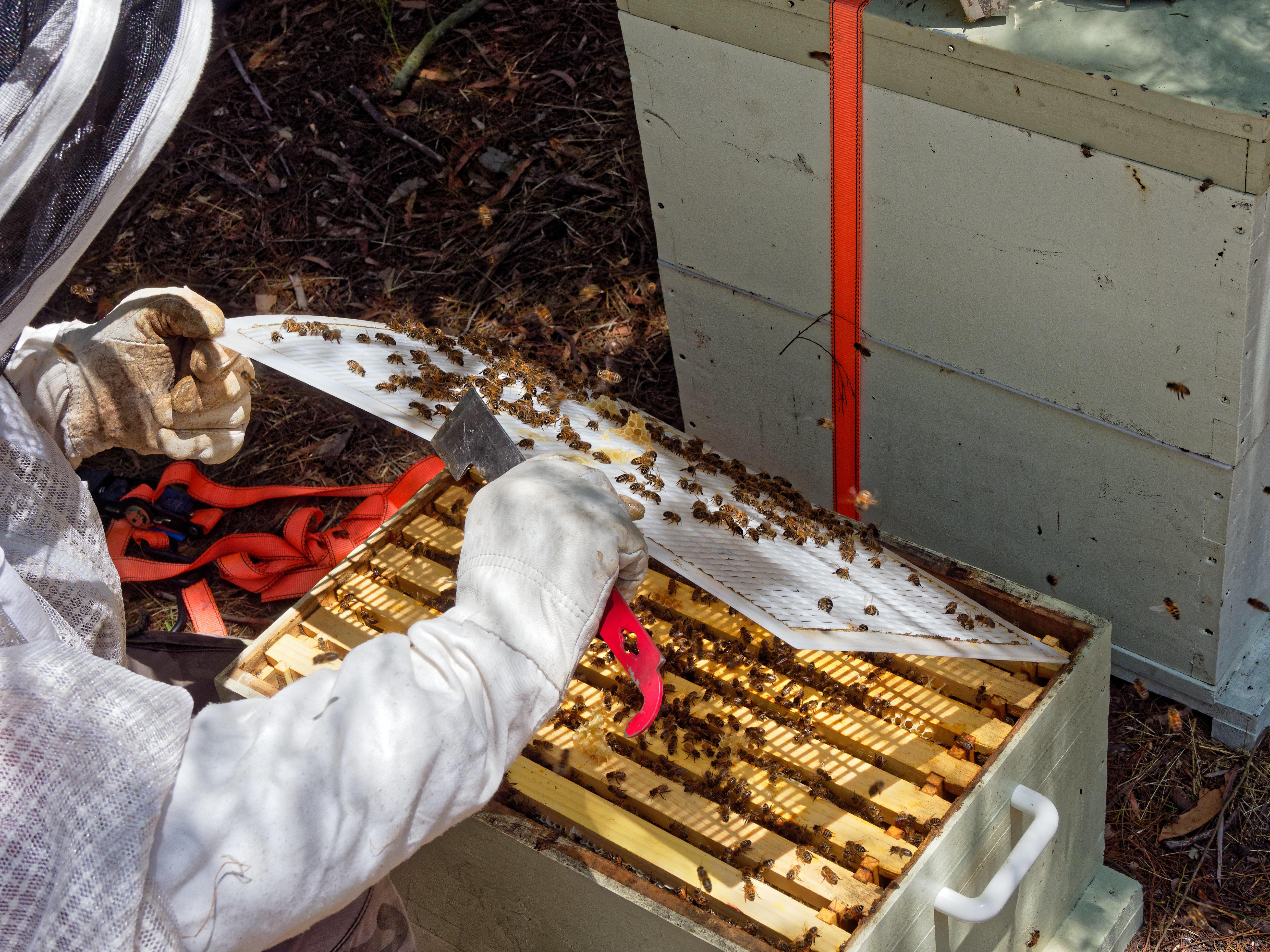 Inspecting-beehives-38.jpeg