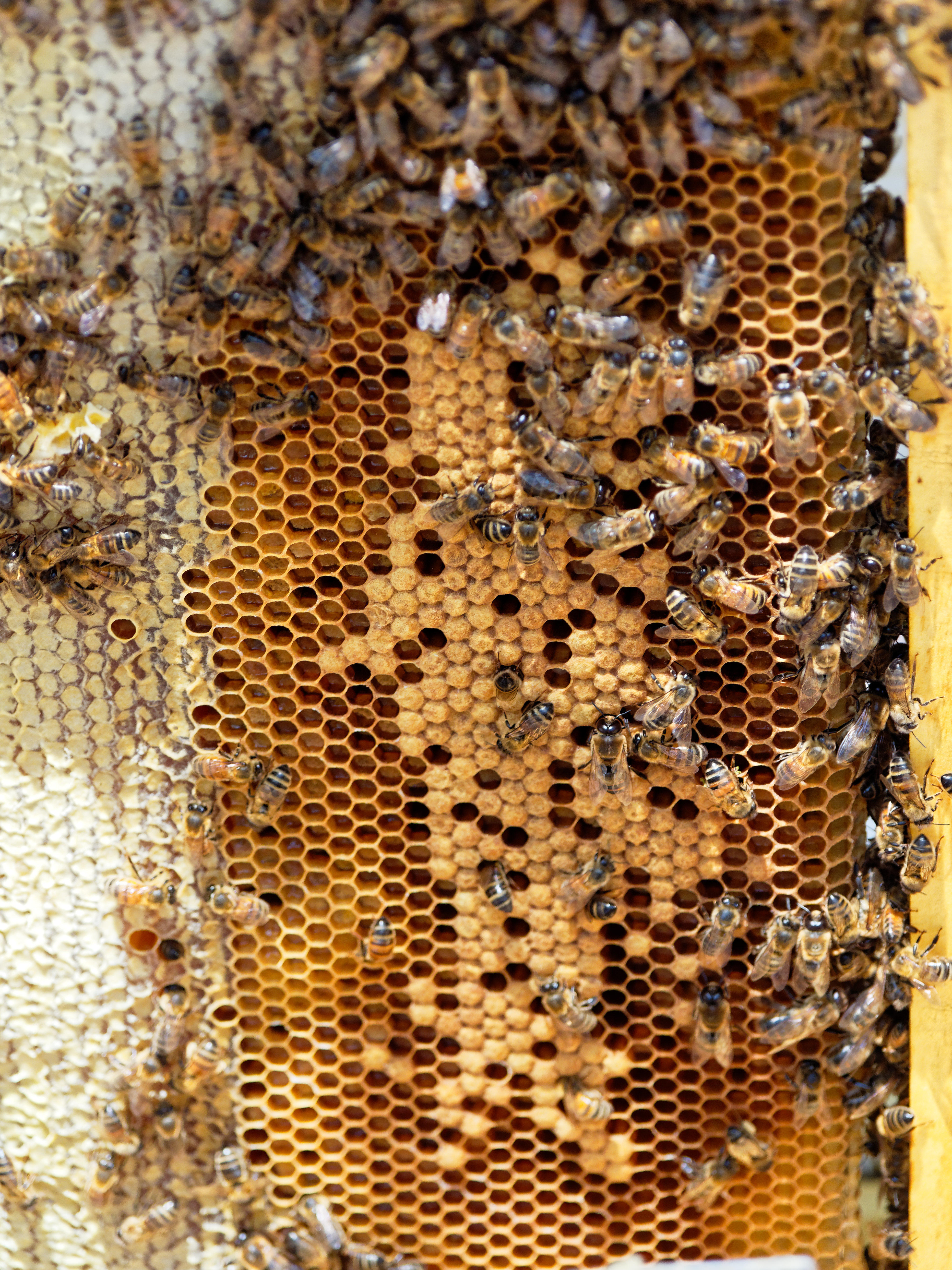 Inspecting-beehives-44.jpeg