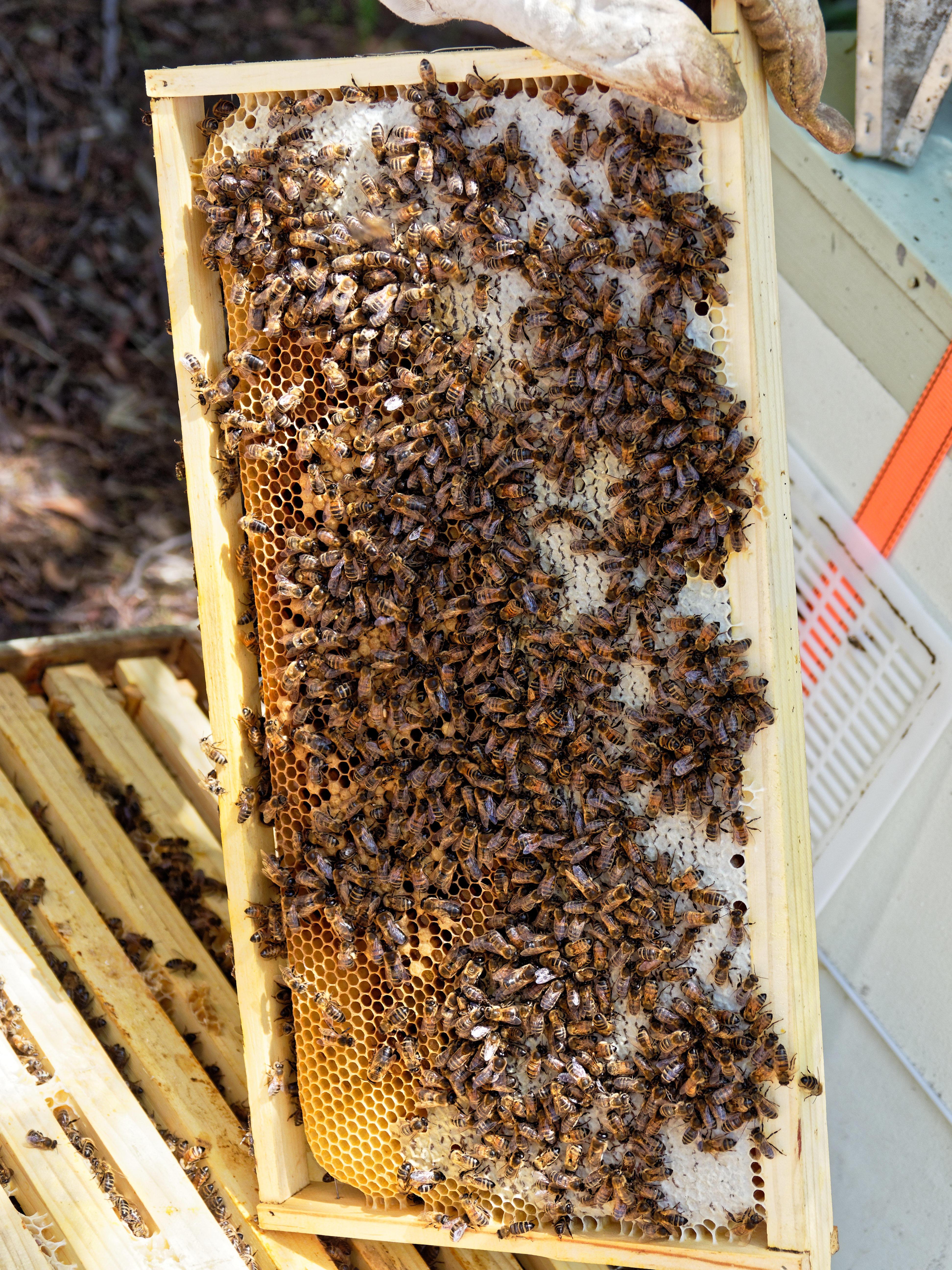 Inspecting-beehives-46.jpeg