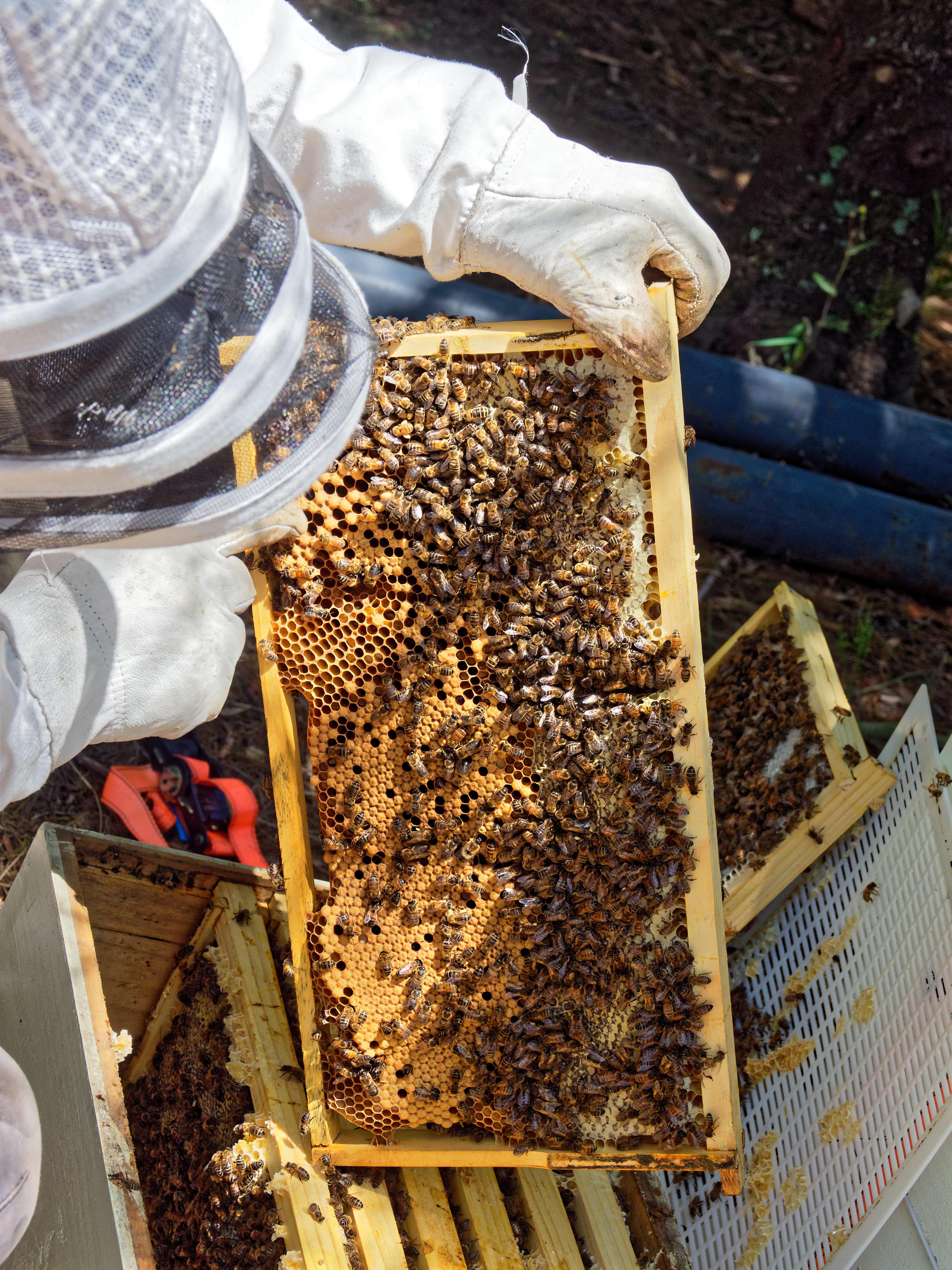 Inspecting-beehives-49.jpeg