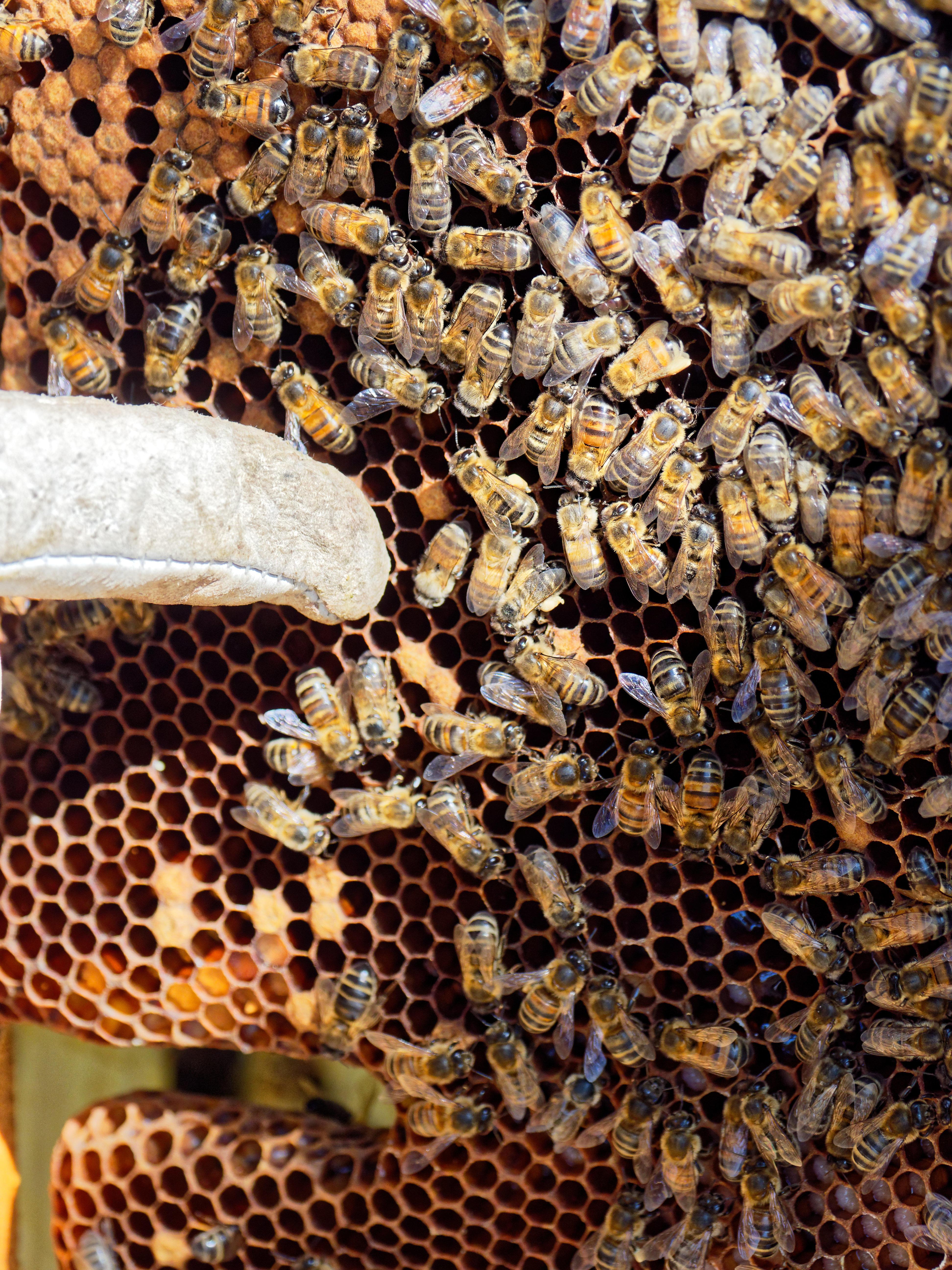 Inspecting-beehives-66.jpeg