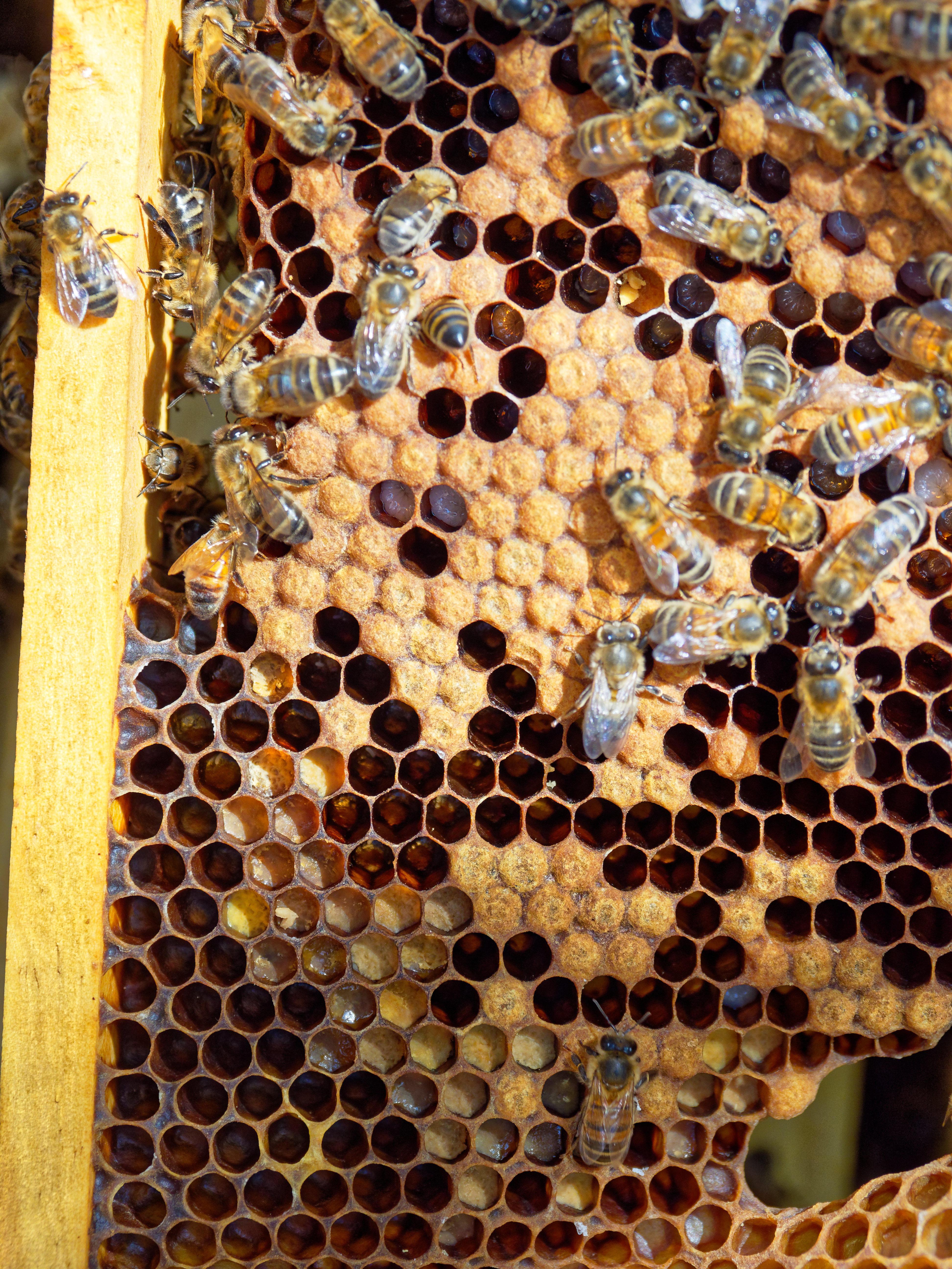 Inspecting-beehives-71.jpeg