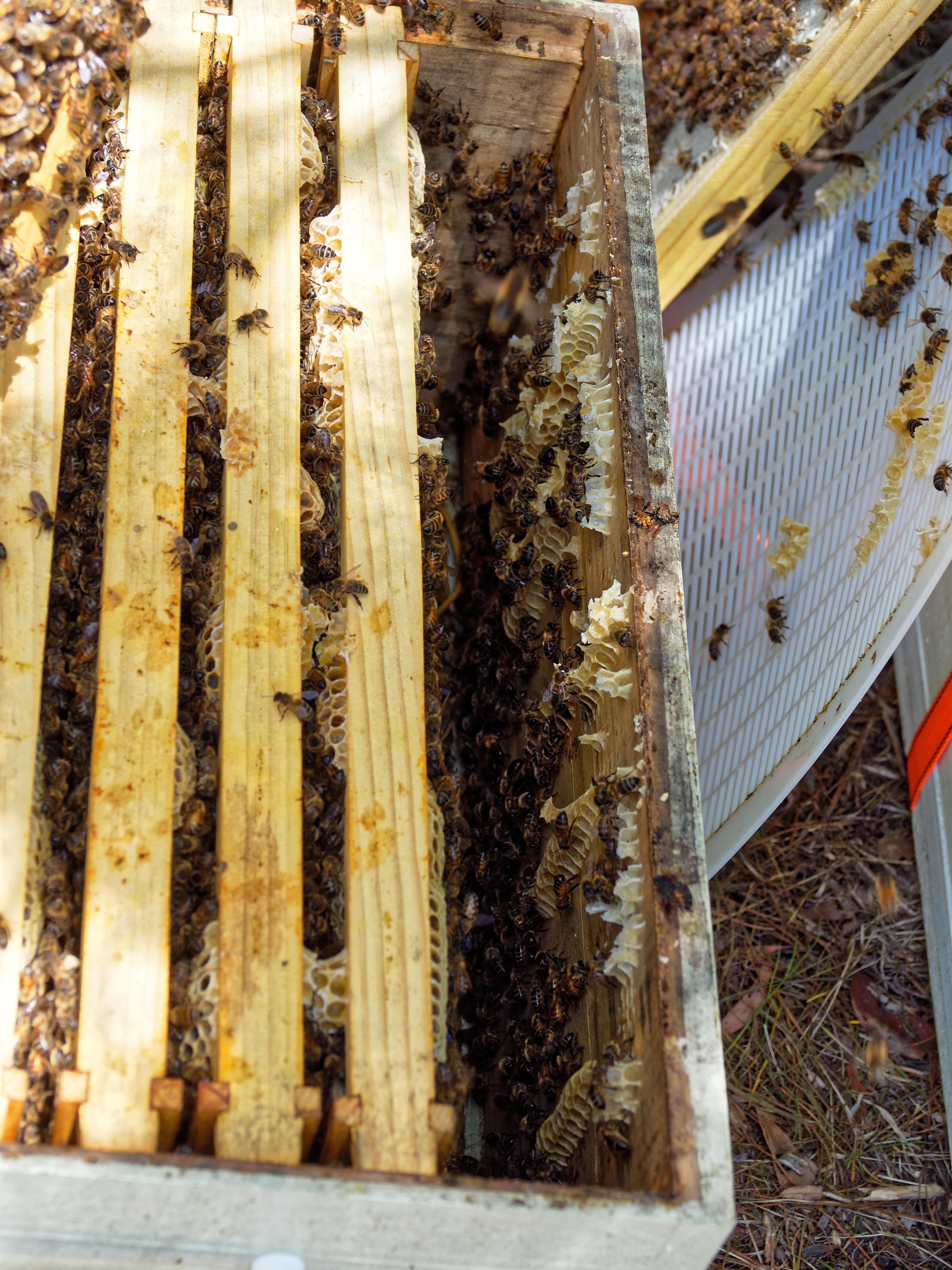 Inspecting-beehives-73.jpeg