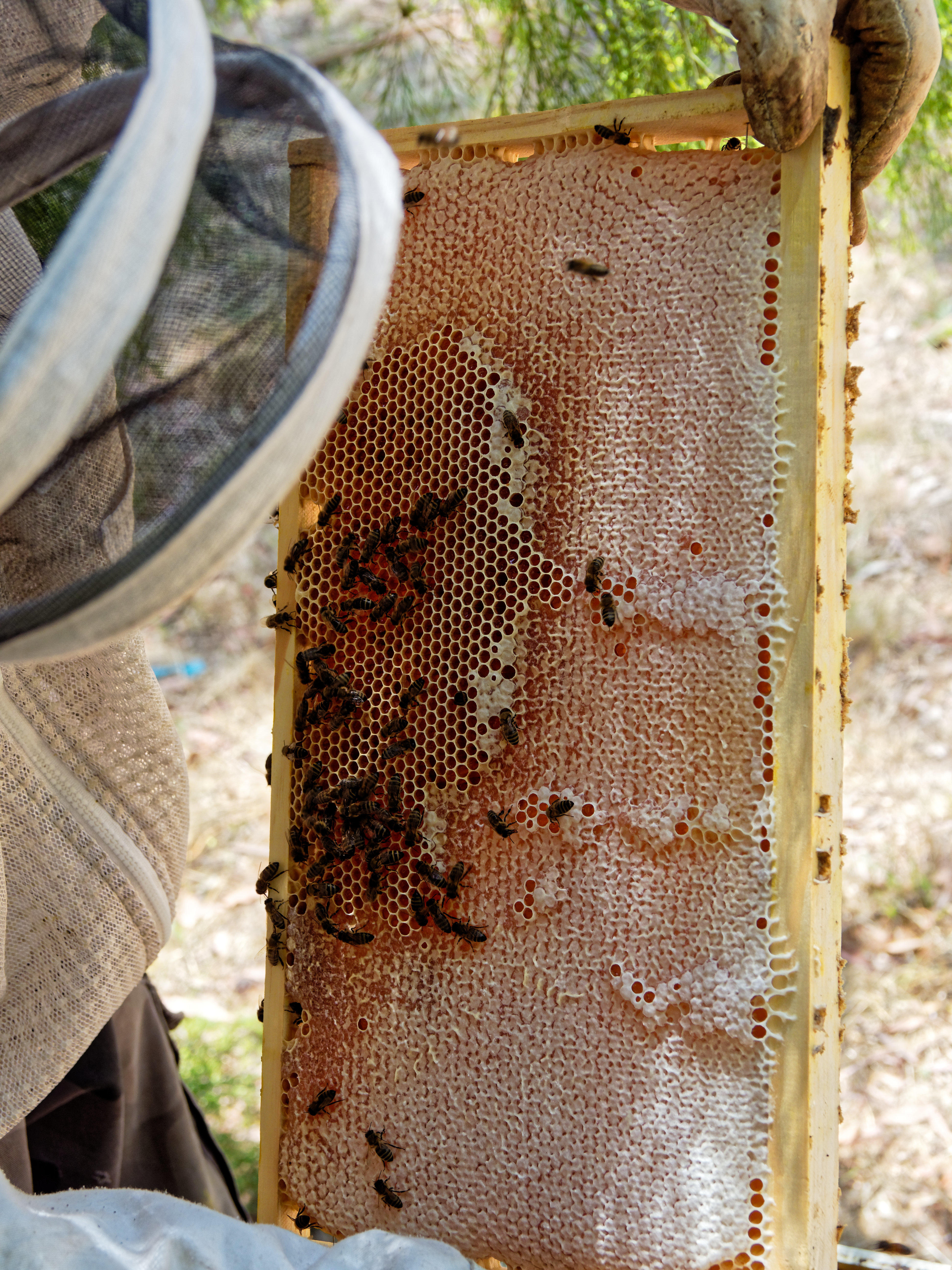 Inspecting-beehives-76.jpeg