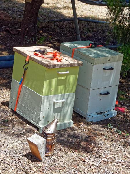 Inspecting-beehives-1.jpeg