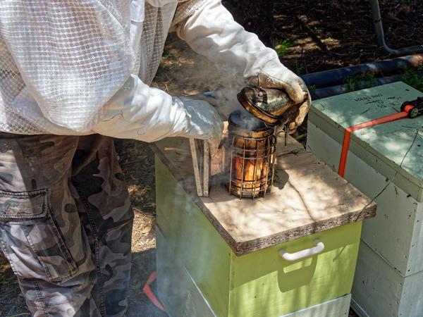 Inspecting-beehives-10.jpeg