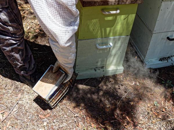 Inspecting-beehives-11.jpeg