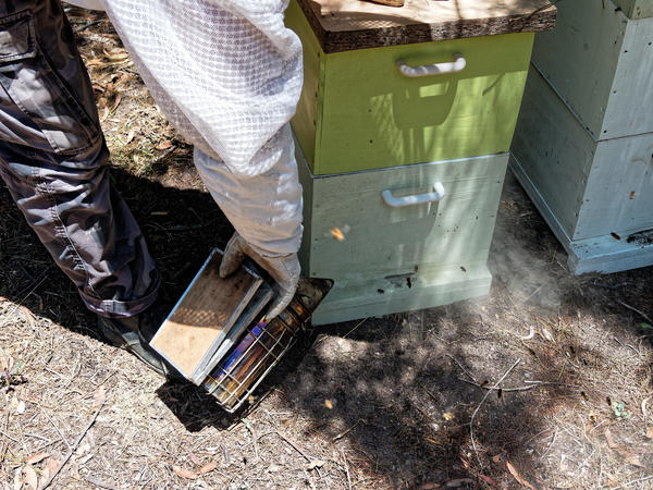 Inspecting-beehives-12.jpeg