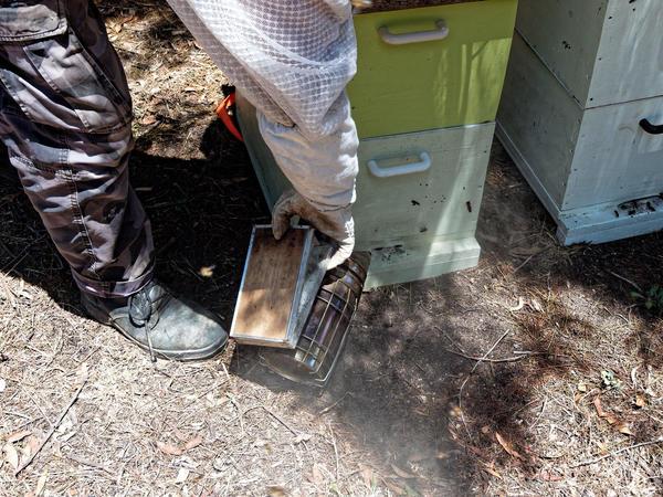 Inspecting-beehives-13.jpeg