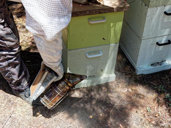 Inspecting-beehives-14.jpeg