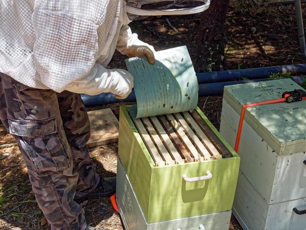 Inspecting-beehives-19.jpeg