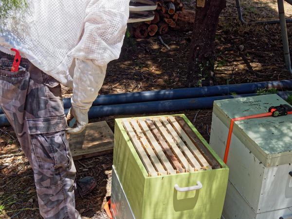 Inspecting-beehives-20.jpeg
