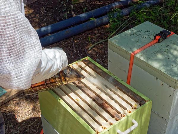 Inspecting-beehives-21.jpeg