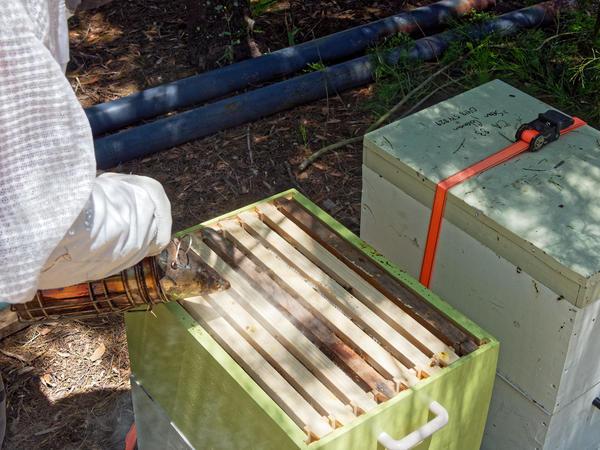 Inspecting-beehives-22.jpeg
