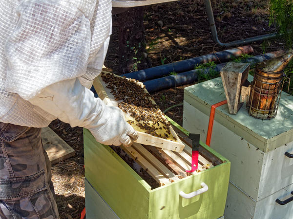 Inspecting-beehives-23.jpeg