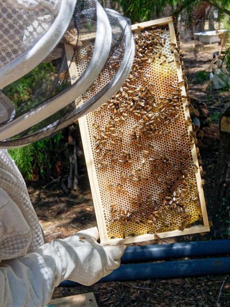 Inspecting-beehives-27.jpeg