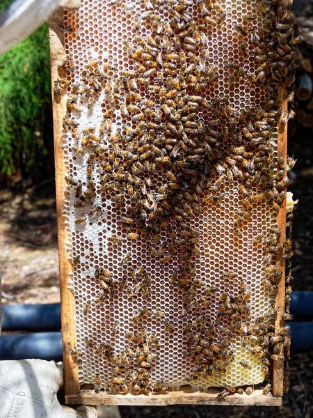 Inspecting-beehives-30.jpeg