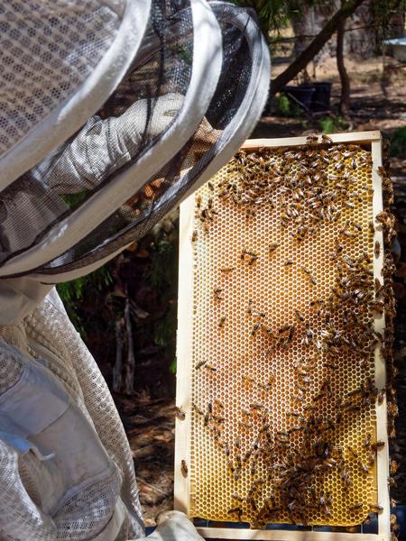 Inspecting-beehives-35.jpeg