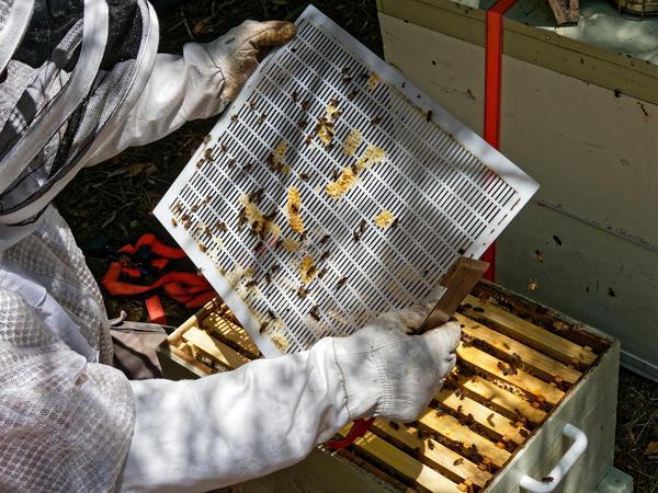 Inspecting-beehives-39.jpeg