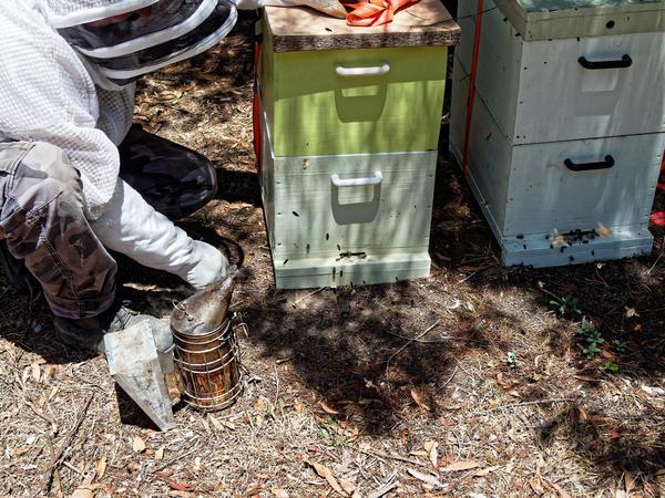 Inspecting-beehives-4.jpeg