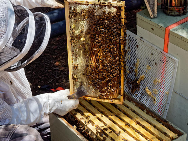 Inspecting-beehives-40.jpeg