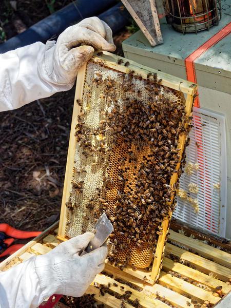 Inspecting-beehives-41.jpeg