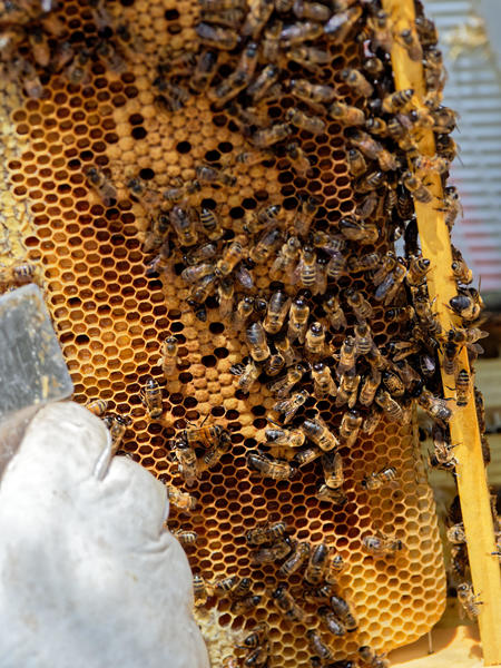 Inspecting-beehives-42.jpeg