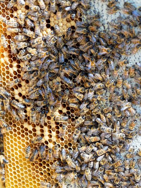 Inspecting-beehives-47.jpeg