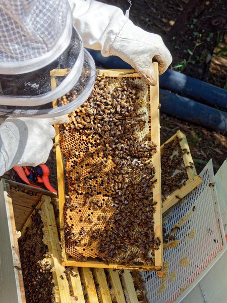 Inspecting-beehives-48.jpeg