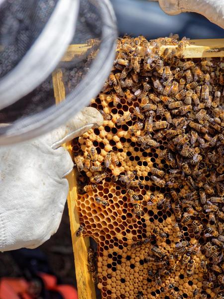 Inspecting-beehives-50.jpeg