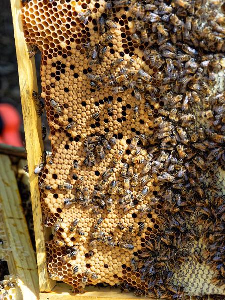 Inspecting-beehives-52.jpeg