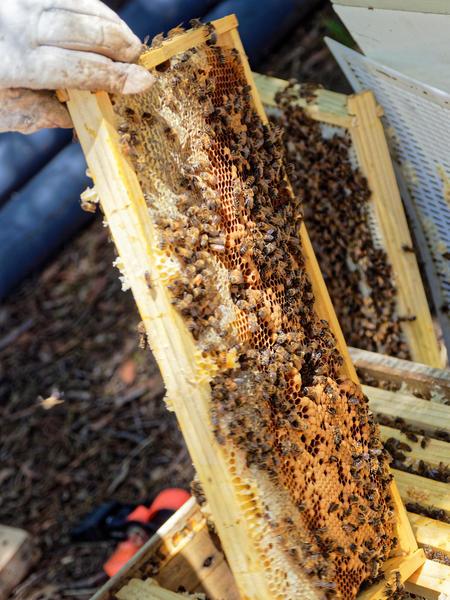 Inspecting-beehives-53.jpeg