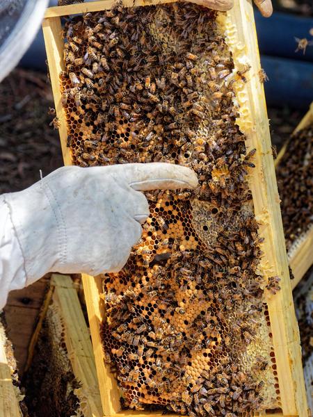 Inspecting-beehives-54.jpeg