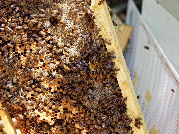 Inspecting-beehives-55.jpeg