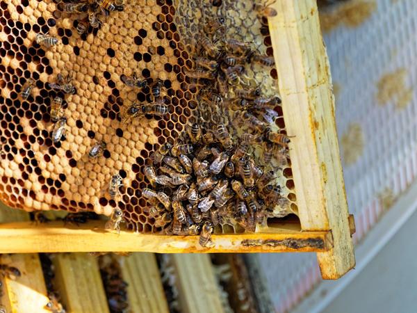 Inspecting-beehives-56.jpeg