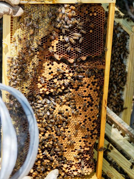 Inspecting-beehives-58.jpeg
