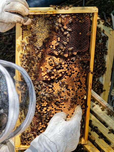 Inspecting-beehives-59.jpeg