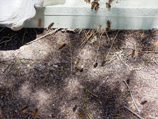 Inspecting-beehives-6.jpeg