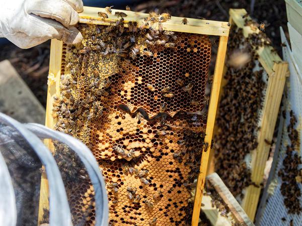 Inspecting-beehives-60.jpeg