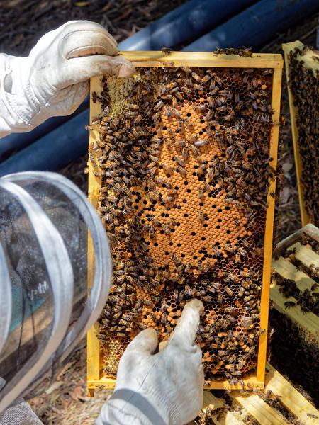 Inspecting-beehives-61.jpeg