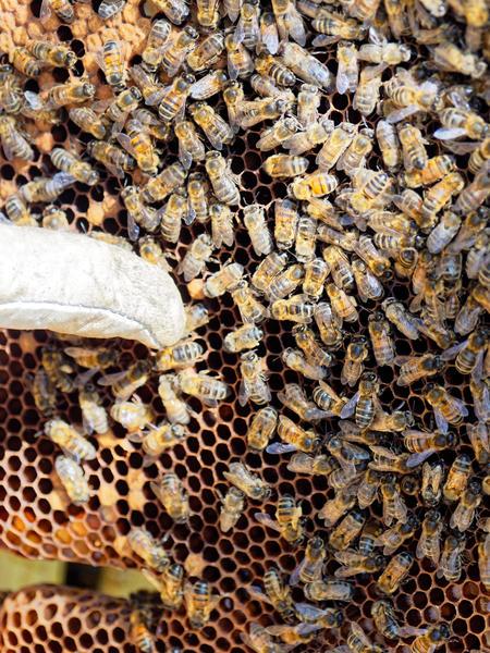 Inspecting-beehives-62.jpeg