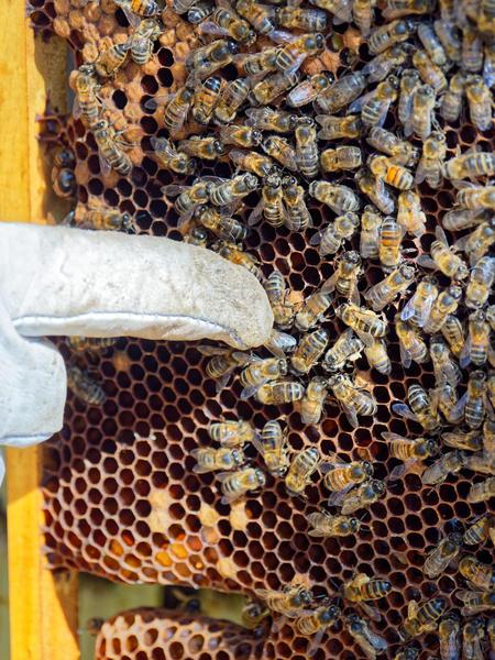 Inspecting-beehives-64.jpeg