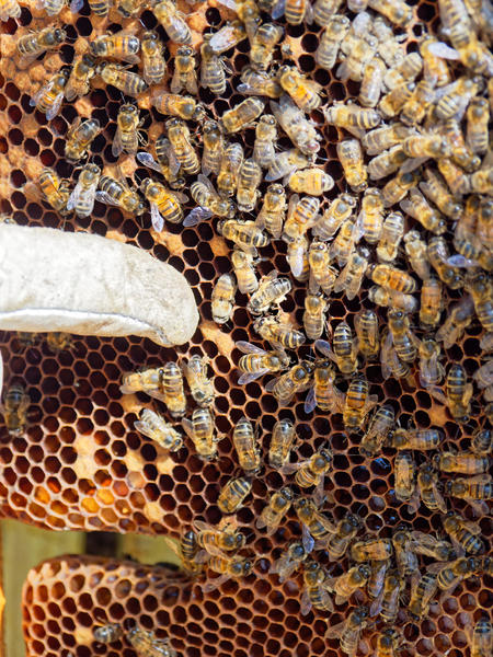 Inspecting-beehives-67.jpeg