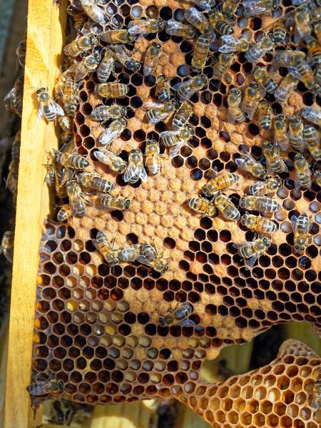 Inspecting-beehives-70.jpeg
