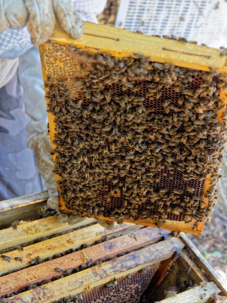 Inspecting-beehives-79.jpeg